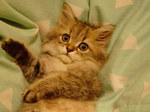 猫かわいい.jpg