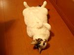 猫ころがり.jpg