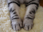 猫の手.jpg