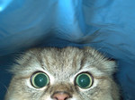 猫目だけ.jpg